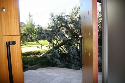 台風の爪痕(プーゲンス倒壊) 072
